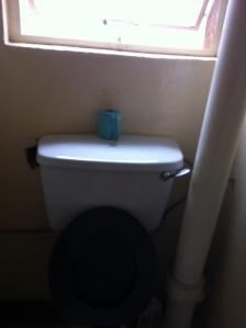 Green toilet paper in Kampala