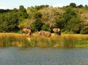 Elephants on the Nile